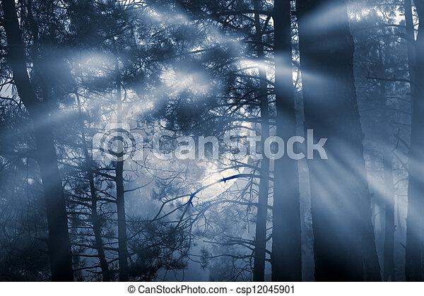 pieno, foresta, luna - csp12045901