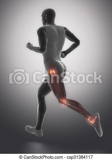 Pierna, -, ligamentos, conectivo, anatomía, tejido, humano clipart ...