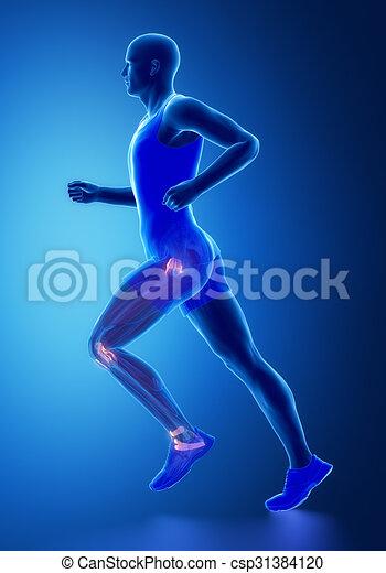 Pierna, -, ligamentos, conectivo, anatomía, tejido, humano clip art ...