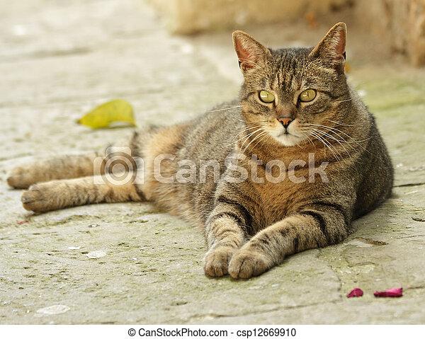 pierre, toscane, mensonge, chat gouttière - csp12669910