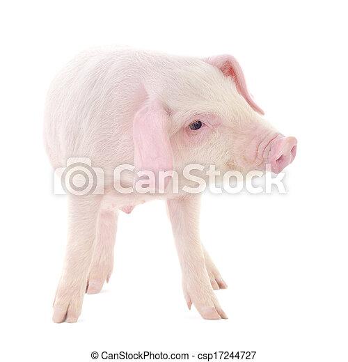 Pig on white - csp17244727