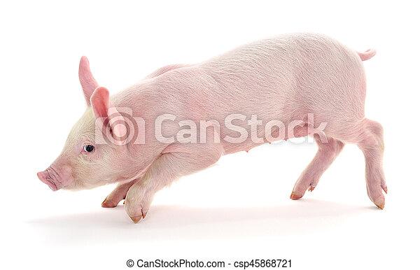 Pig on white. - csp45868721