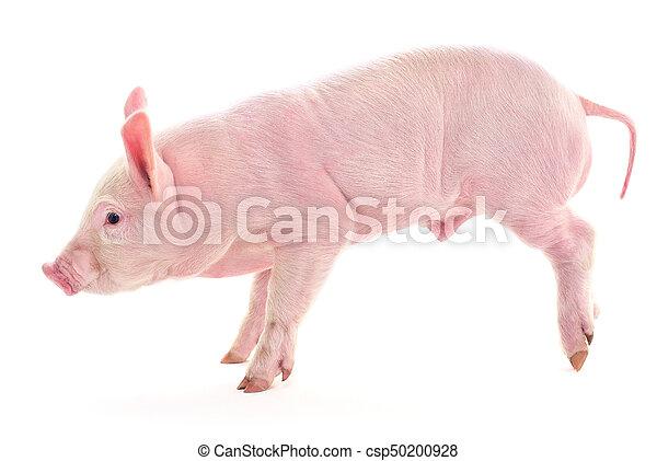 Pig on white. - csp50200928