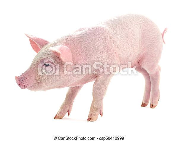 Pig on white. - csp50410999