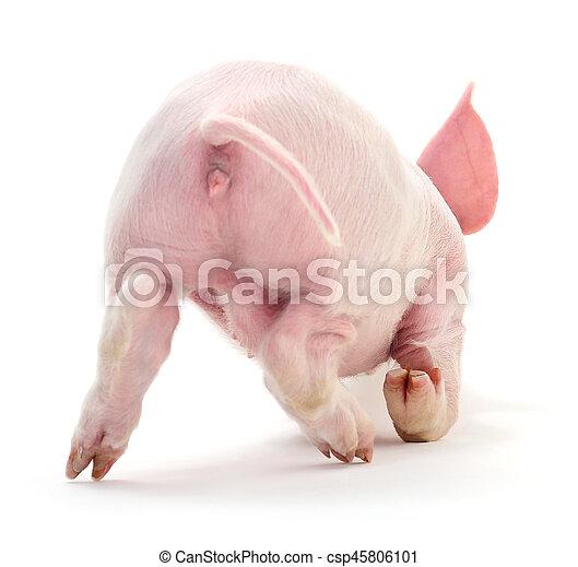 Pig on white. - csp45806101