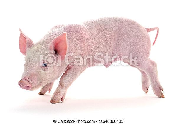 Pig on white. - csp48866405