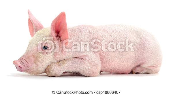 Pig on white. - csp48866407