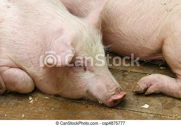 pig pork domestic animal agriculture - csp4875777