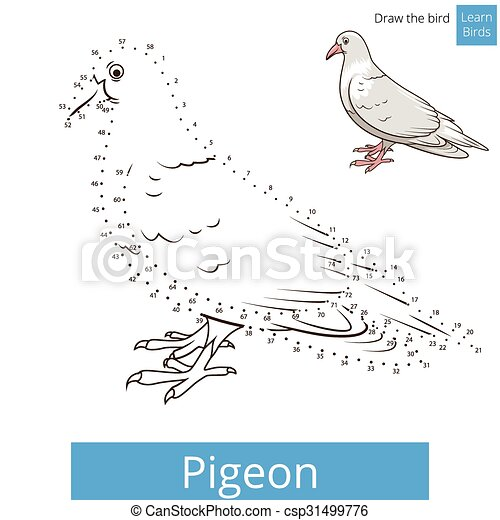Pigeon Bird Learn To Draw Vector Pigeon Learn Birds Educational