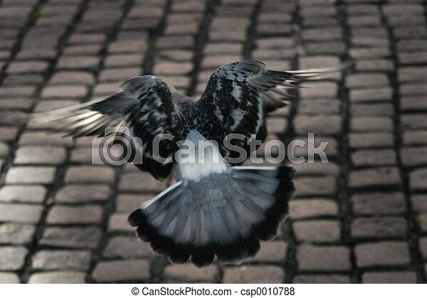 Pigeon Escape - csp0010788