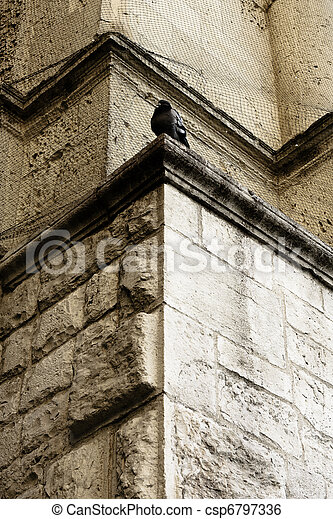 Pigeon on Ancient Wall - csp6797336