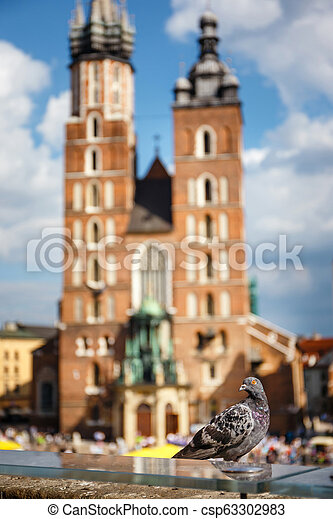 pigeon sitting on a stone wall, in the backround the Main Market Square with St. Mary's Church, Krakow, Poland - csp63302983