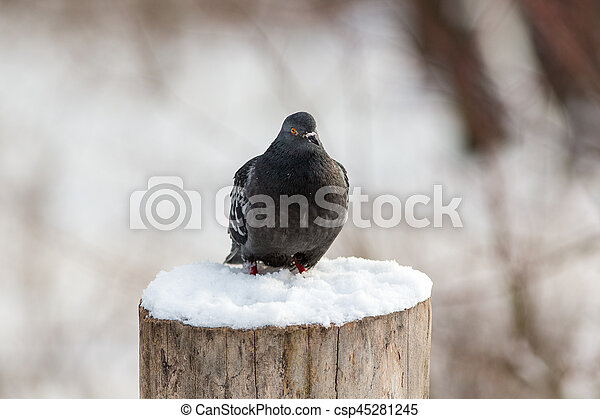 pigeon sitting on a tree stump - csp45281245