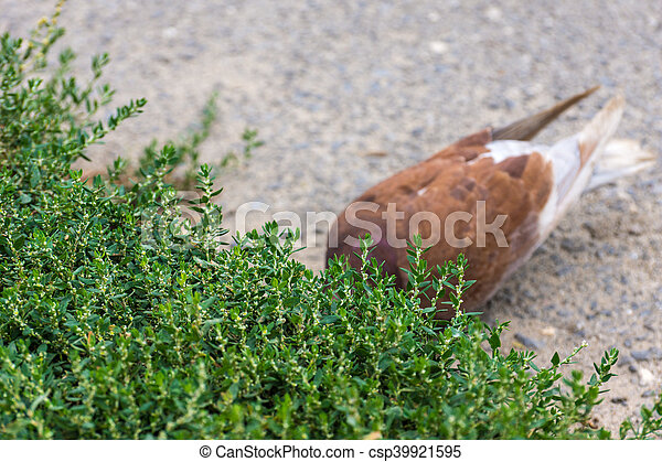 Pigeon sitting on the sand in the city - csp39921595