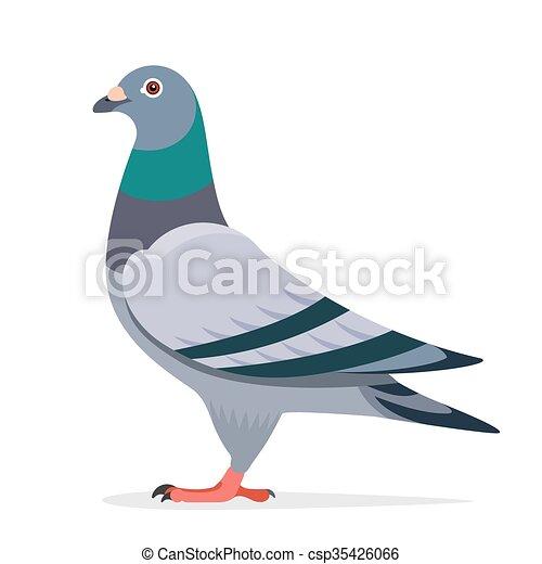 pigeon vector character pigeon bird vector character color flat