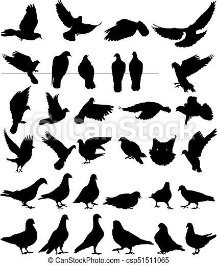 pigeon vector silhouettes bird - csp51511065