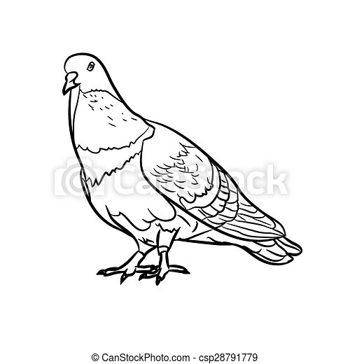 Pigeons dessin pigeons fond blanc dessin - Dessin pigeon ...