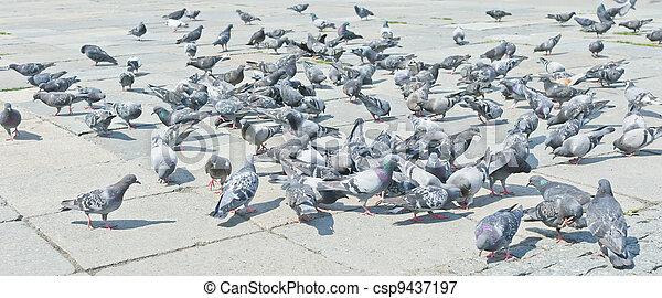 Pigeons on city street - csp9437197