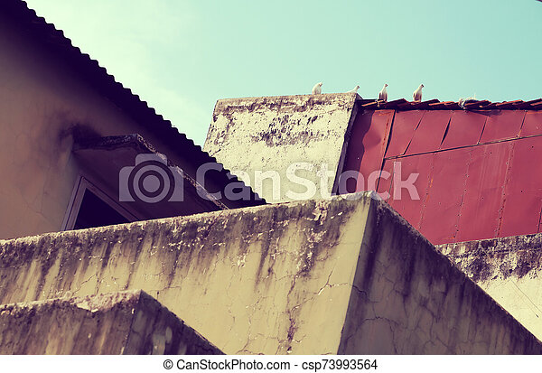pigeons on roof, amazing shape from curves of architect from antique wall - csp73993564
