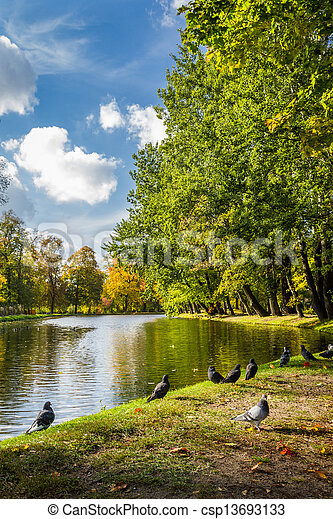 Pigeons on the river in autumn park - csp13693133