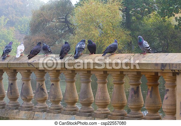 Pigeons standing on wall - csp22557080