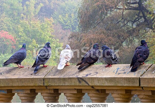 Pigeons standing on wall - csp22557081