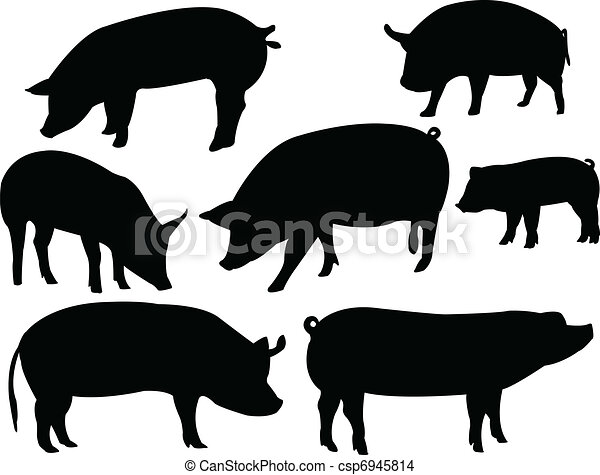 Pigs collection - csp6945814