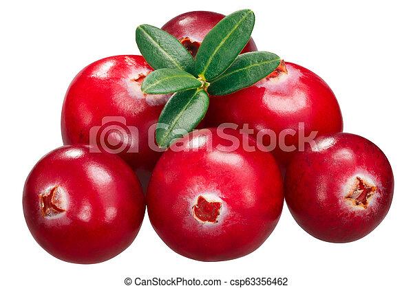 Cranberries contra oxycoccus pila, caminos - csp63356462