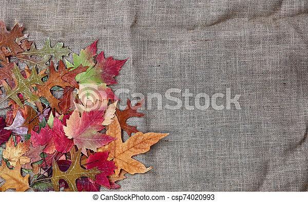 Pile of Autumn leaves for the season on burlap setting - csp74020993