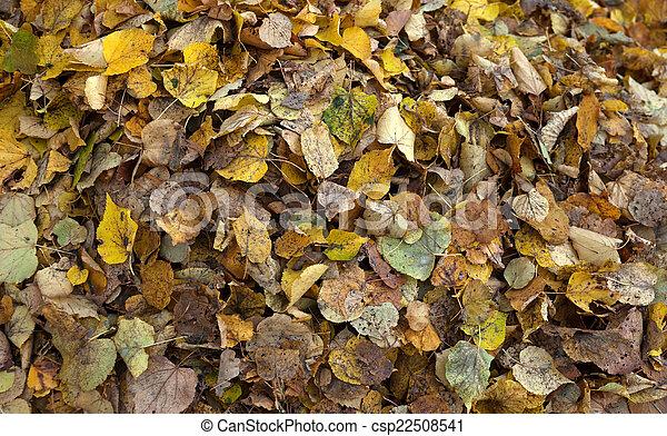 Pile of autumn leaves - csp22508541