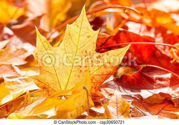 Pile of autumn leaves - csp30650721