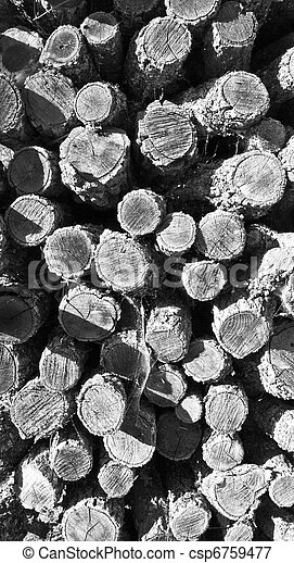 pile of cut logs for firewood - csp6759477