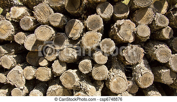 pile of cut logs for firewood - csp6748876
