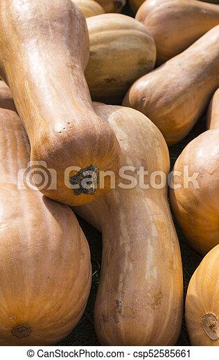 pile of pumpkins at autumn harvest festival. background, vegitables. - csp52585661