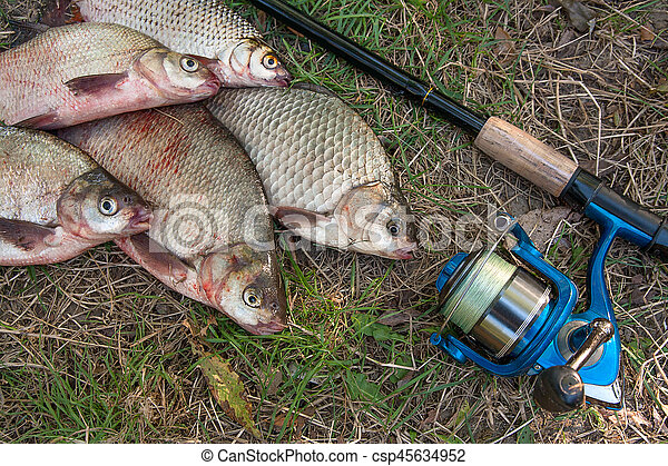 Pile of the common bream fish, crucian fish or Carassius, roach fish on the natural background. Catching freshwater fish and fishing rods with fishing reels on green grass - csp45634952