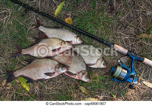 Pile of the common bream fish, crucian fish or Carassius, roach fish on the natural background. Catching freshwater fish and fishing rods with fishing reels on green grass - csp49061907