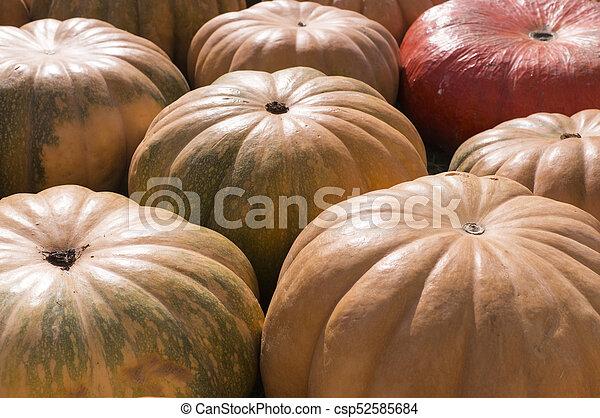 pile of various pumpkins at harvest festival. background, vegetables. - csp52585684