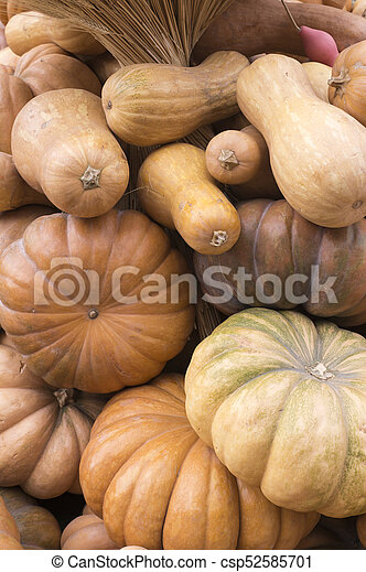 pile of various pumpkins at harvest festival. background, vegetables. - csp52585701