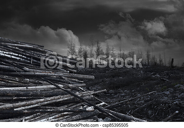 Pile of wood after forest fire area - csp85395505