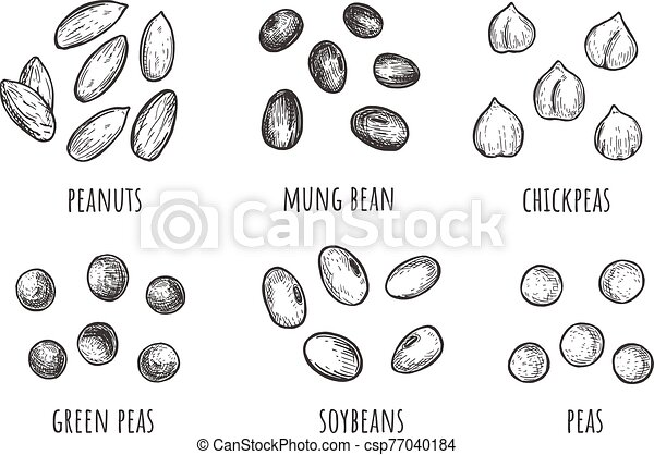 Seed Types Set - Download Free Vectors, Clipart Graphics & Vector Art