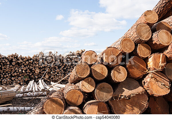 Piles of felled trees is lying on the ground at large warehouse. - csp54040080