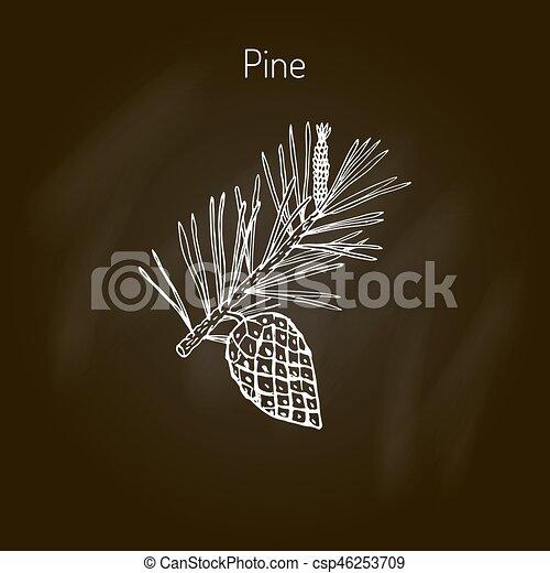 pin, branche, cône - csp46253709