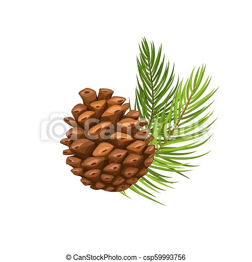 pin, branche, cône - csp59993756