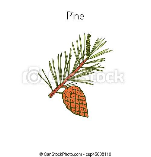 pin, branche, cône - csp45608110