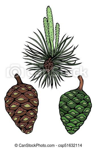 pin, branche, cône - csp51632114