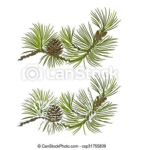 pin, branche, cône, vecteur - csp31755839