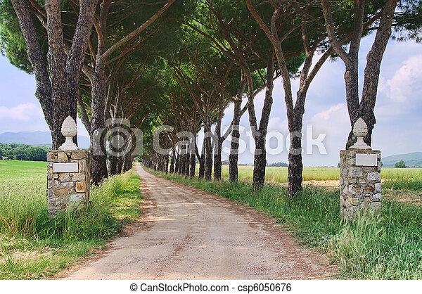 pine avenue 03 - csp6050676