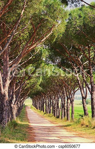 pine avenue 06 - csp6050677