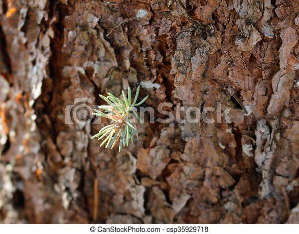 Pine Bark Wood Texture - csp35929718