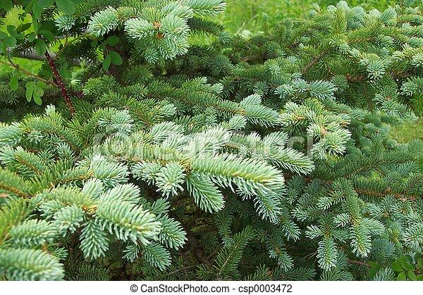 Pine bough landscap - csp0003472